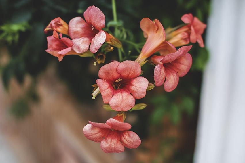 Sycylijska roślinność