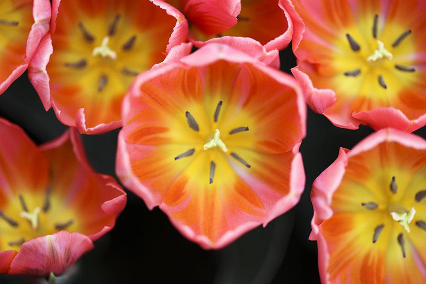ogrody kwiatowe